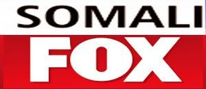 Somali Fox